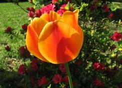 pretty-flower