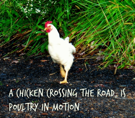 poultry-in-motion
