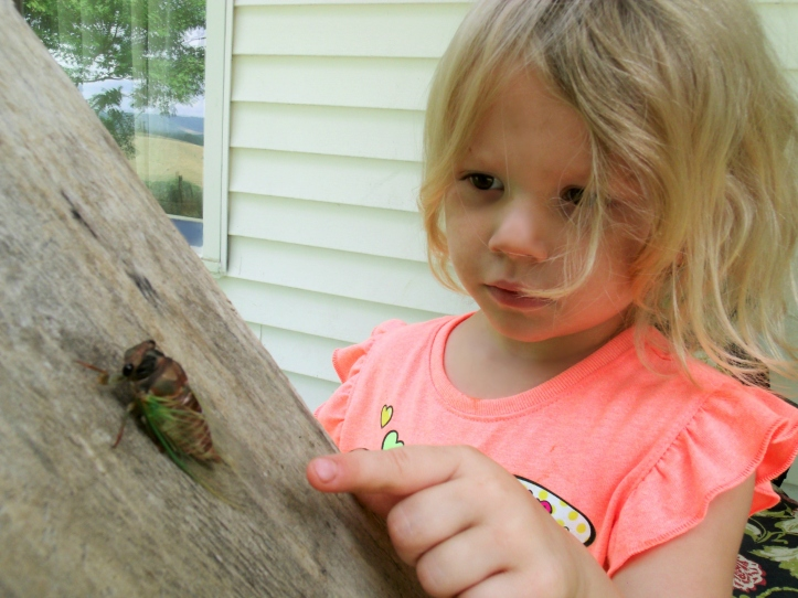 KatieBugs crawling Cicada.jpg
