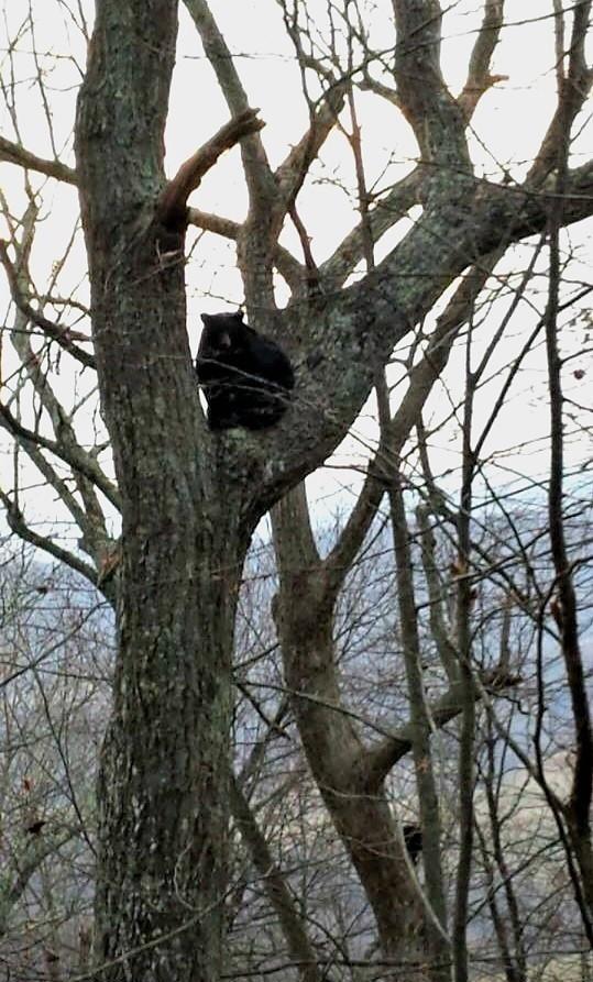 smokey-bear-is-that-you